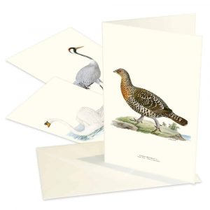 Kort fåglar