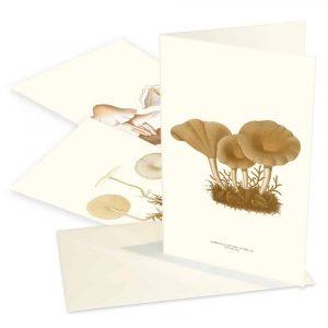 Kort svampar