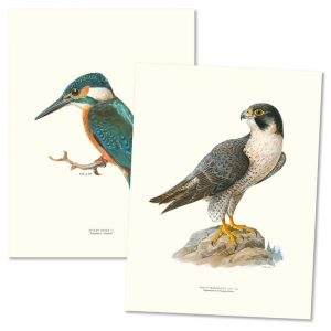 Posters fåglar