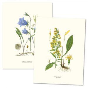 Posters växter