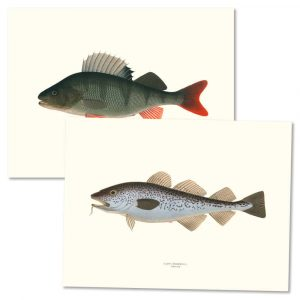 Posters fiskar
