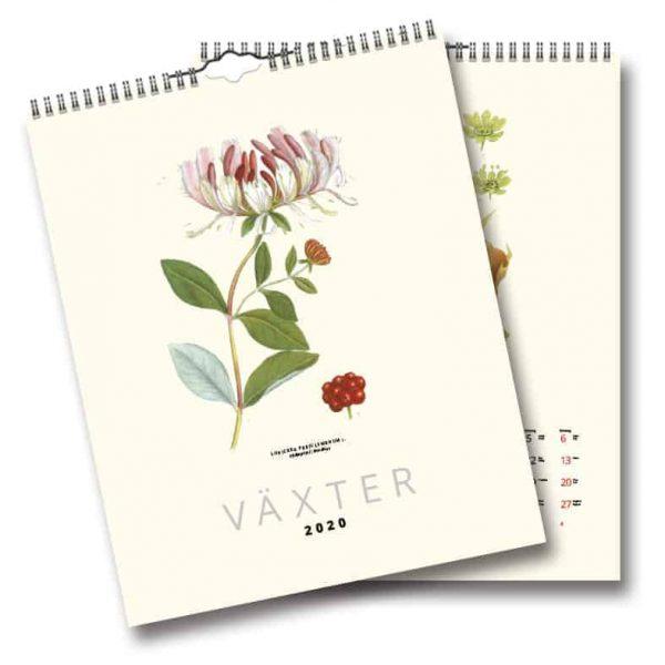 Väggkalender Växter 2020 med illustrerade växter gjorda av C.A.M. Lindman i början av 1900-talet. Kalenderspecialisten.
