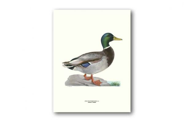 Affisch Medium Gräsand Von Wright Kalenderspecialisten