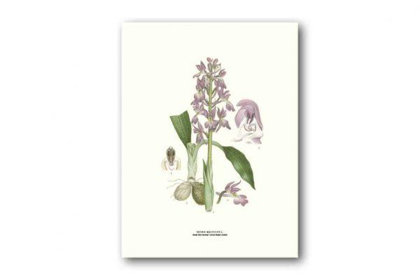 Affisch medium Sankt pers nycklar Retro Poster Kalenderspecialisten