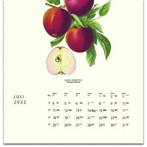 Väggkalender Äpplen 2022 kalendarium