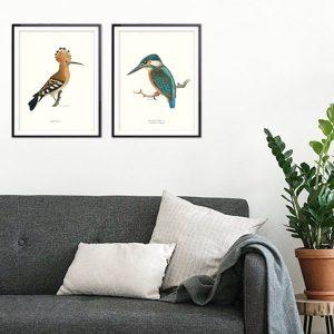 Poster fåglar