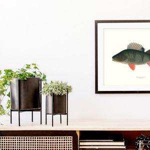 Poster fiskar