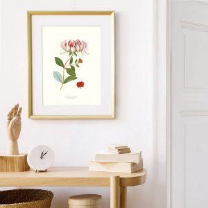 Poster växter